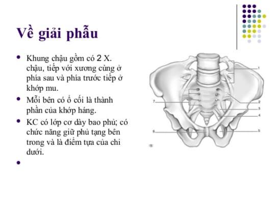 bai-giang-gay-xuong-chau-dr-tien