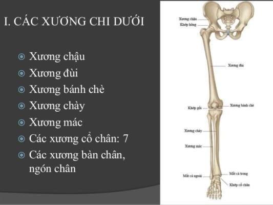bai-giang-gay-xuong-chi-duoi-dr-tien