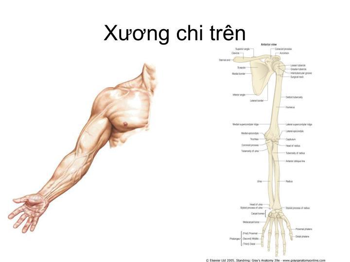 bai-giang-gay-xuong-chi-tren-dr-tien