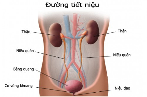bai-giang-ung-thu-tiet-nieu-drtien-hai-phong